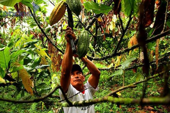 Chocolat d'Equateur 2