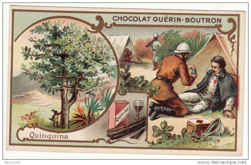 quinine equateur