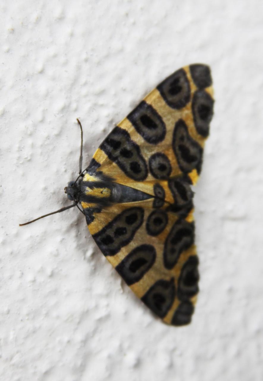 papillons Equateur